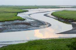 Destroyed coastal habitats produce significant greenhouse gas