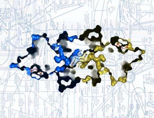 Turning on key enzyme blocks tumor formation