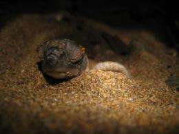 Turtles' mating habits protect against effects of climate change