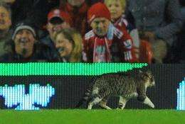 Twitter account @Anfieldcat now has over 30,000 followers