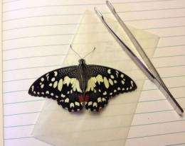 UF Guantanamo Bay Lepidoptera study sets baseline for future research