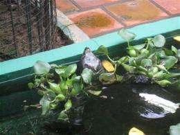 Vietnam returns endangered turtle to Cambodia