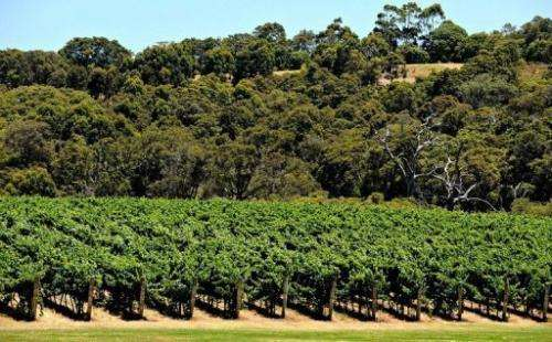 Vineyards in the Margaret River wine region in Western Australia