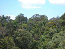 Rainforest regeneration in Indonesia slower than expected