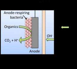 Waste to watts: Improving microbial fuel cells