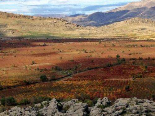 Wild grape vines still grow in gullies and washes across this great expanse of mountains
