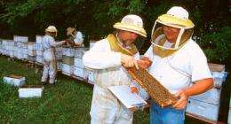 Winter honey bee losses decline
