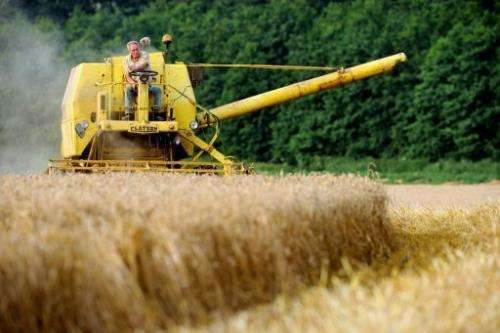 A farmer drives his combine harvester on a wheat field, August 11, 2012, in Cassel, northern, France