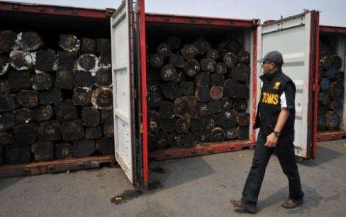 An Indonesian customs officer inspects illegal logs placed inside containers at Jakarta port on September 20, 2011
