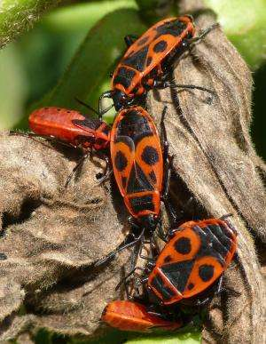 Bugs need symbiotic bacteria to exploit plant seeds