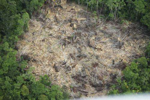 Deforestation rates in Brazil surge, after years of progress to slow forest loss