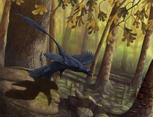 Dinosaur wind tunnel test provides new insight into the evolution of bird flight