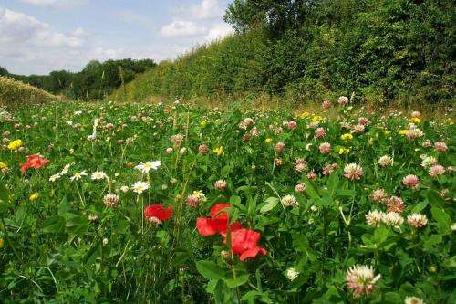 Ecologists get first bumblebees' eye view of the landscape