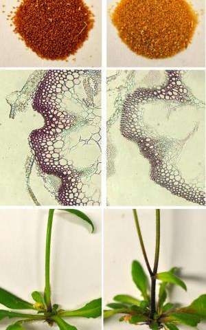 Enlisting cells' protein recycling machinery to regulate plant products
