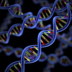 Enzymes allow DNA to swap information with exotic molecules