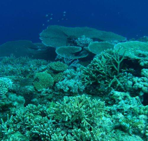 Fluorescent light revealed as gauge of coral health
