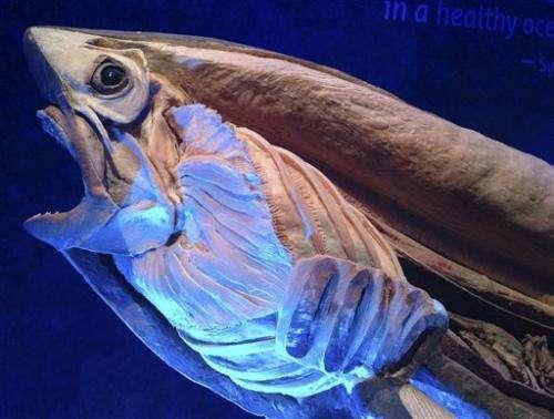 Georgia Aquarium exhibits preserved sea creatures