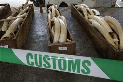 HK nabs $5.3M in ivory, rhino horns, leopard skins