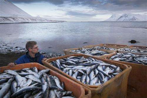 Iceland investigating mass herring deaths