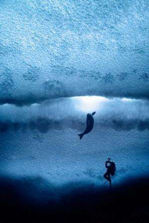 Image provided by Antarctic Ocean Alliance on November 1, 2011 shows a diver taking photos of a seal in Antarctic waters