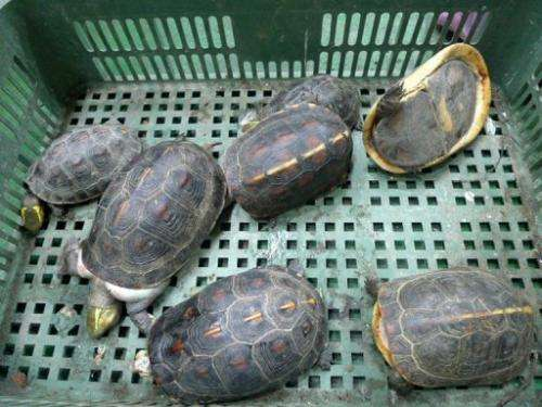 Image released on August 25, 2013 shows rare turtles in a container in Kaoshiung, a port in the south of Taiwan