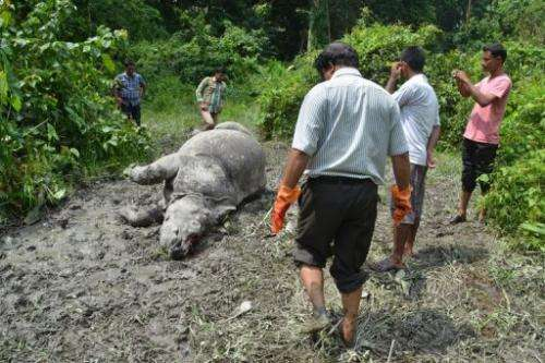 Indian forest officials stand near the body of a Rhinoceros which was killed and de-horned by poachers, August 21, 2013
