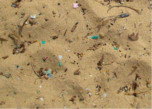 Microplastics make marine worms sick