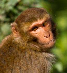 Monkey Business: Researchers discover primitive forms of wealth