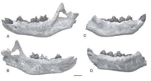 New cursorial hyena found from the late cenozoic Zanda Basin of Tibetan Plateau