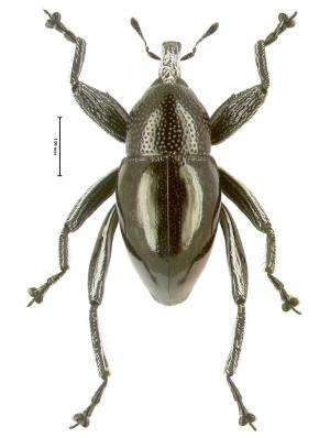 Papuan phonebook helps scientists describe 101 new beetle species