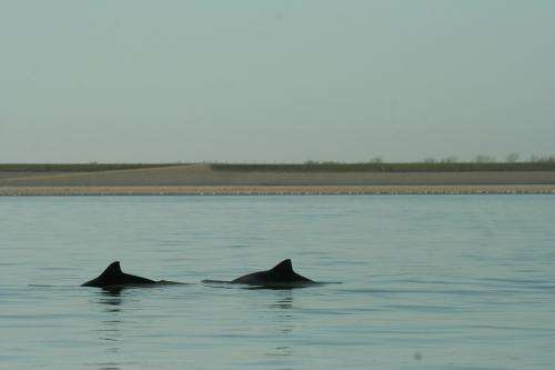 Porpoises have to be careful in the Eastern Scheldt