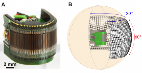 Researchers build curved insect-sized artificial compound eye (w/ video)