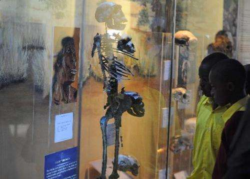 School children look at early-man skeleton fossils on display at the national museum in the capital, Nairobi, on October 18, 201