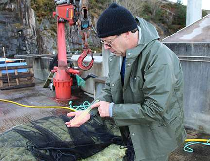 Slimy tunicates may be worth billions