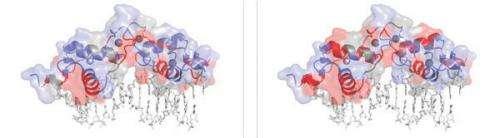 Transcription factors: Function follows form