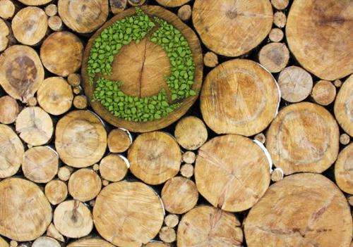 Transportation fuels from woody biomass promising way to reduce emissions
