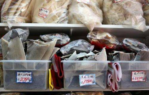 Trays filled with shark fins are displayed at a store in Chinatown on August 24, 2011 in San Francisco, California