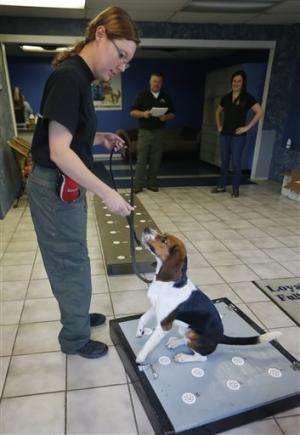 US zoo using beagle to detect bear pregnancies