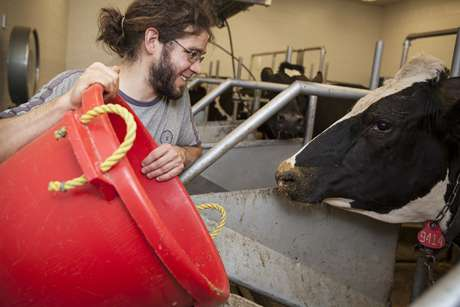 Waste heat could keep cows cool and comfortable