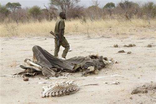 Zimbabwe: Poachers poison 91 elephants