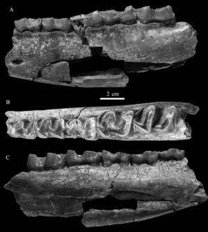 New species of Eggysodontid found from the Paleogene of the Guangnan Basin, Yunnan, China