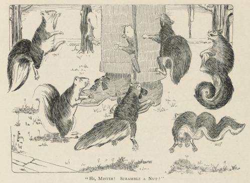 Penn researcher traces the history of the American urban squirrel