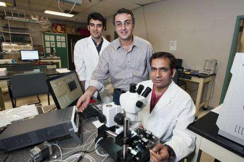 Researchers fine-tune the sensitivity of nano-chemical sensor