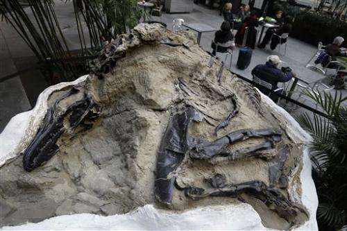 'Montana Dueling Dinos' to sell at NYC auction