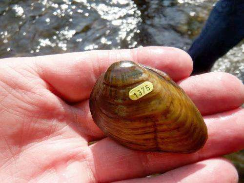 Researchers move endangered mussels to save them
