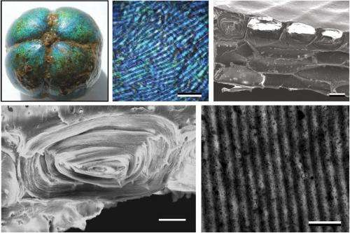 Bioinspired fibers change color when stretched