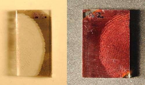 Computer programs improve fingerprint grading
