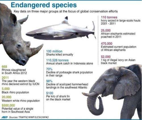 Graphic fact file on threats to rhinos, elephants and sharks