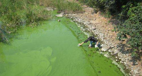 Increasing toxicity of algal blooms tied to nutrient enrichment and climate change