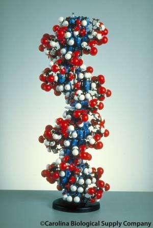 Is eating DNA safe?